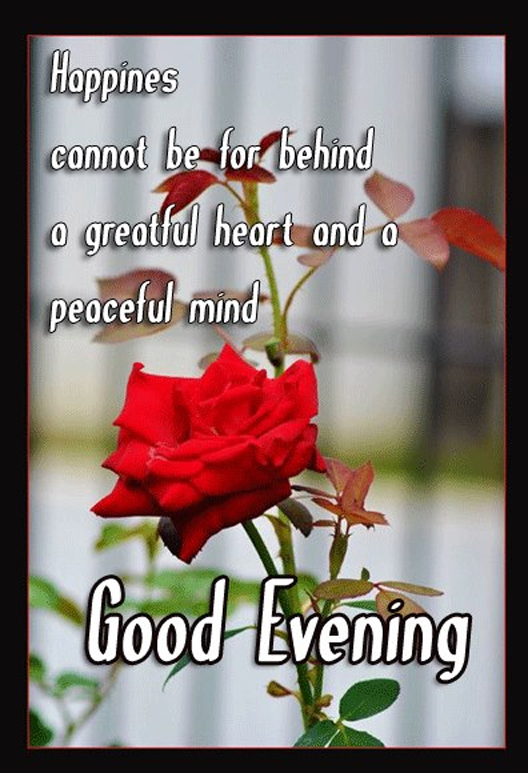 Good Evening Quotes Good Evening Images Good Evening Graphic